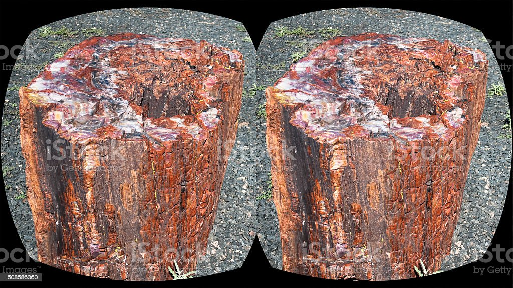 VR virtual reality stereoscopic headset view of a petrified tree stock photo