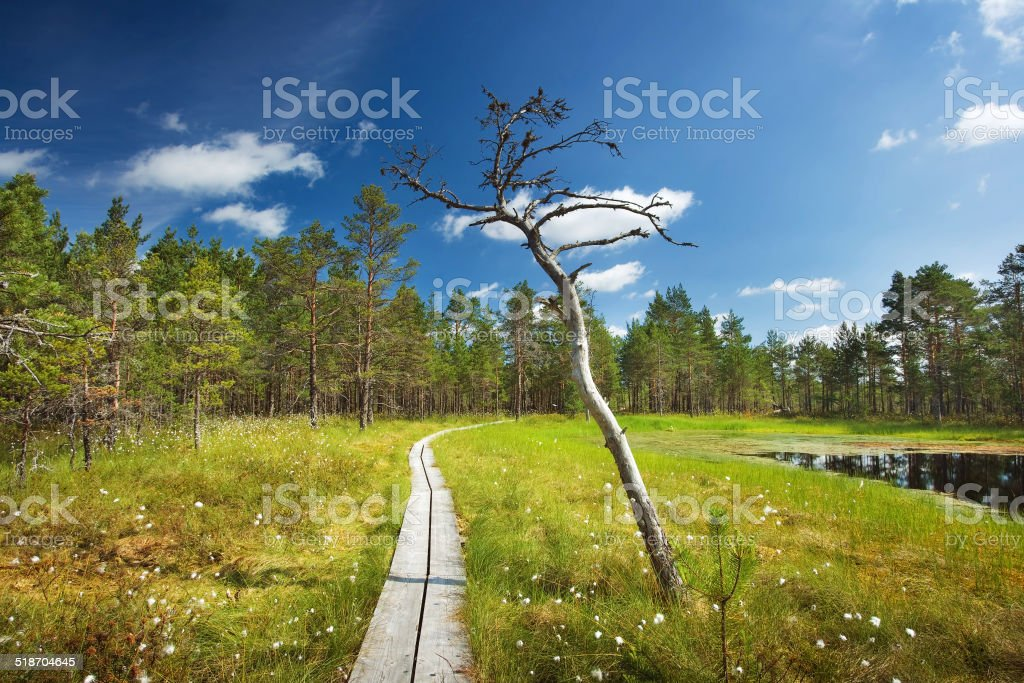 Viru bogs at Lahemaa national park stock photo