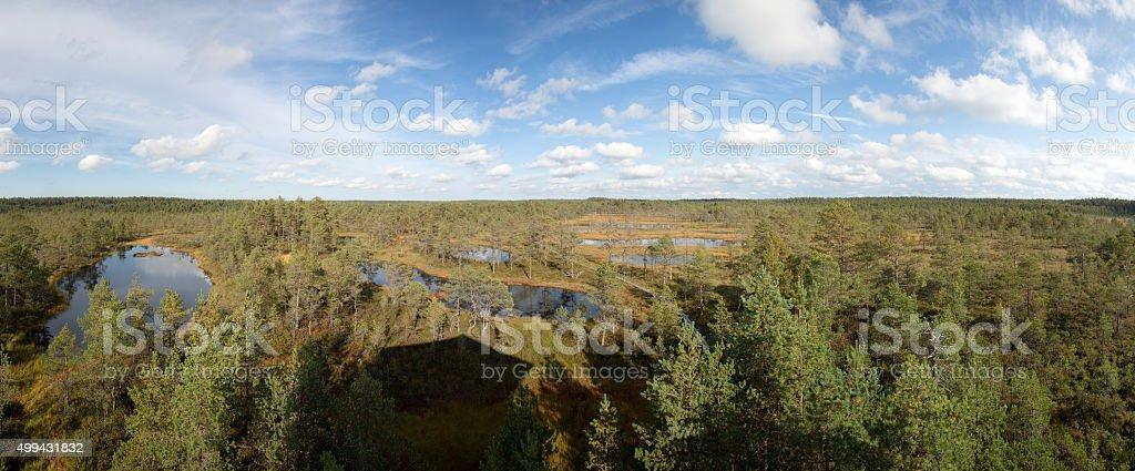 Viru bogs stock photo