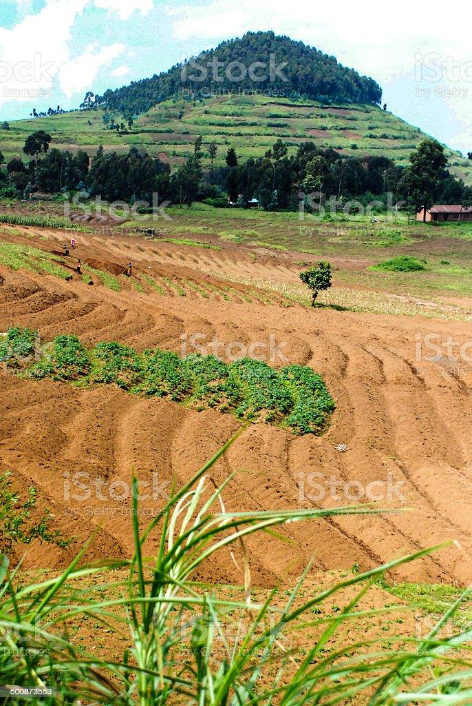 Virunga volcanoes around Mudende Mugongo Rwanda Central Africa stock photo