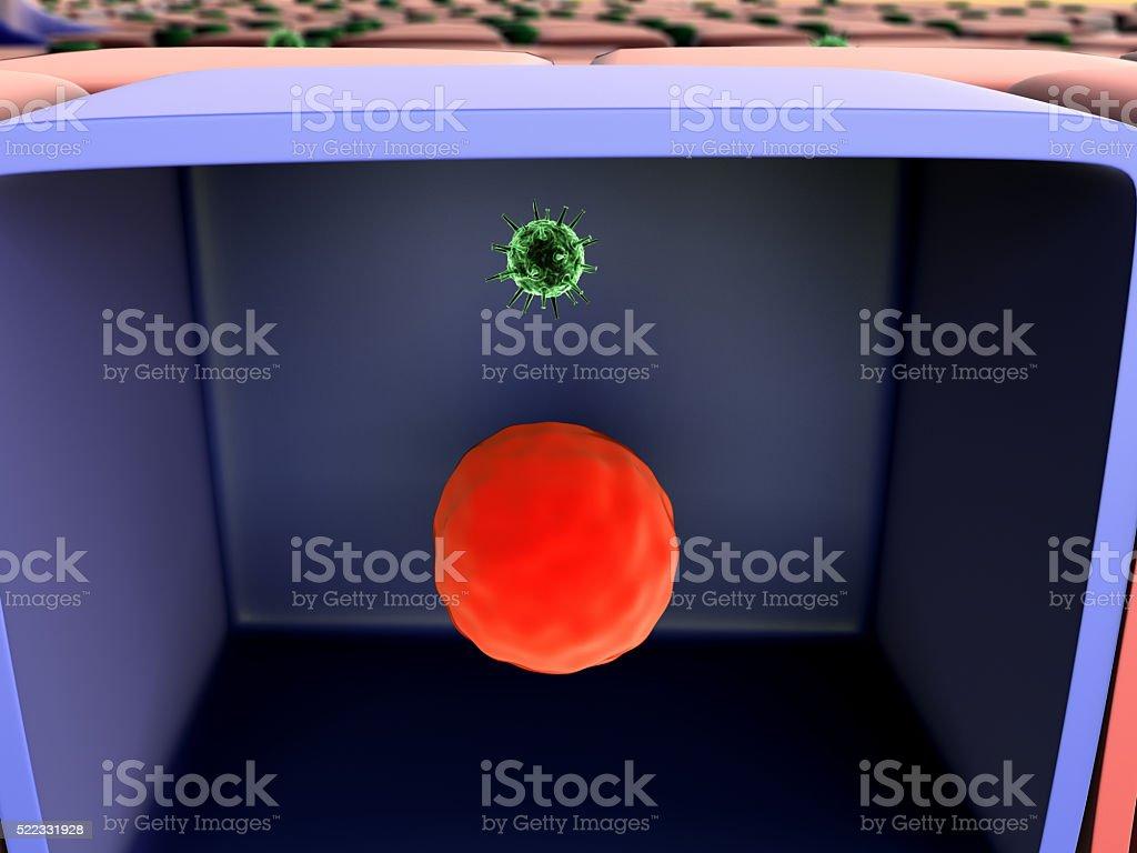 viruses inside the cell stock photo