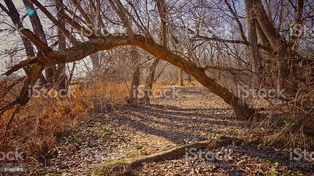 Vischer Ferry Nature Preserve Ecosystem, Hiking Trail, Woods Rexford, NY stock photo