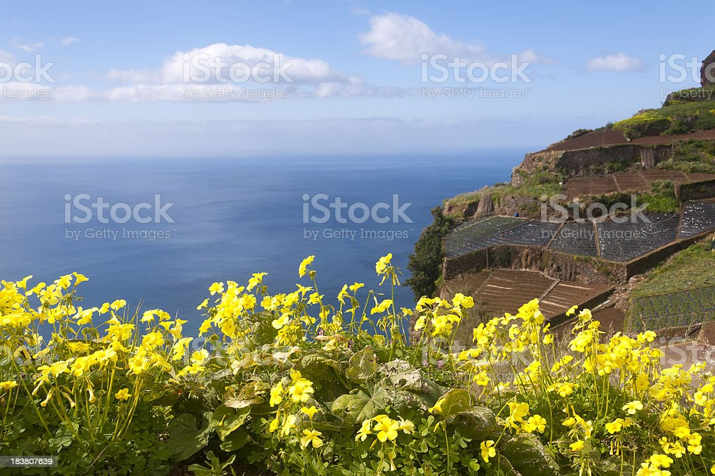 Visiting Madeira: Agriculture and Landscape stock photo