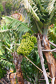 Visiting Madeira: Agriculture and Tropical Fruits