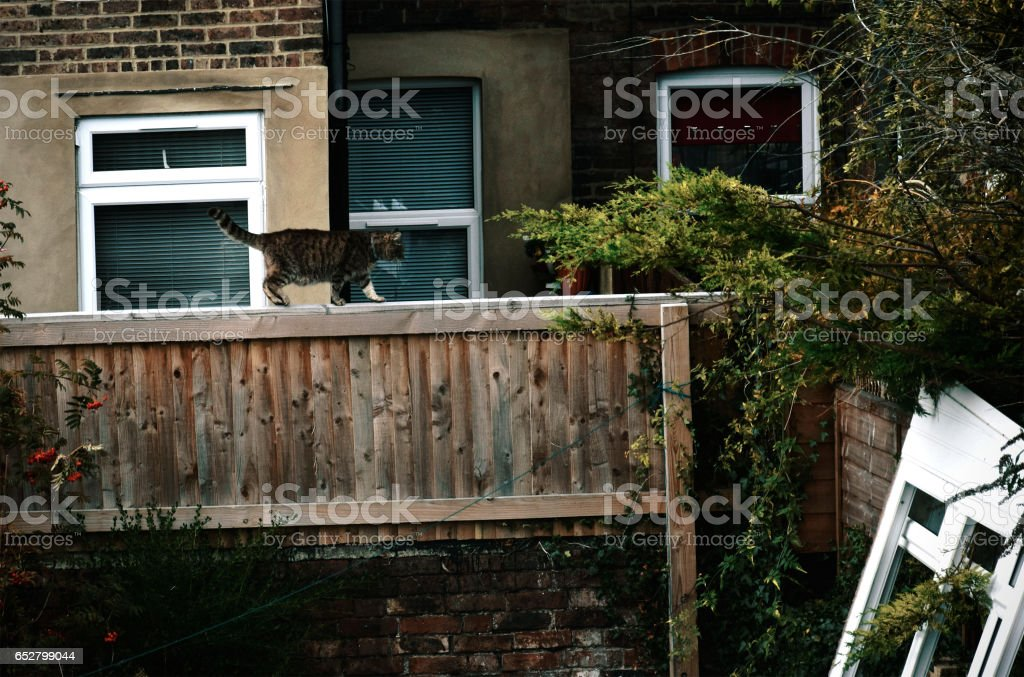 Visiting neighbour cat stock photo