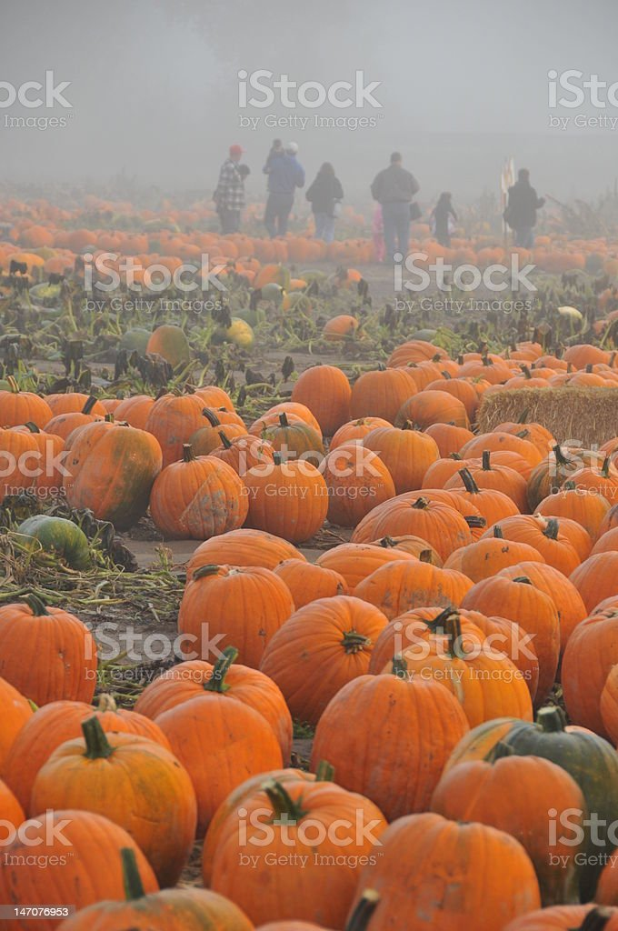 Visiting the Pumpkin Patch stock photo