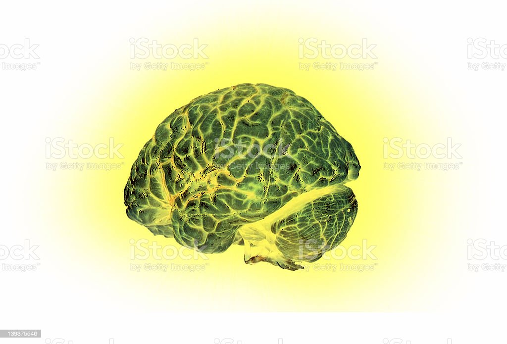 Visual Brain royalty-free stock photo