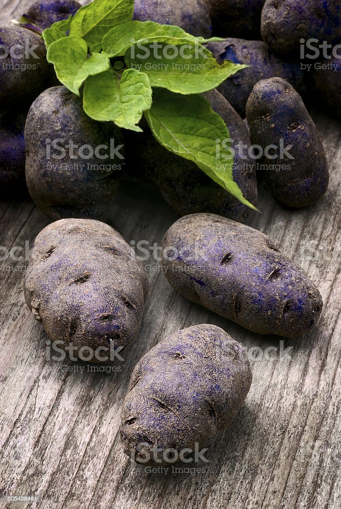 Vitelotte blue-violet potato (Solanum ? ajanhuiri Vitelotte Noir stock photo