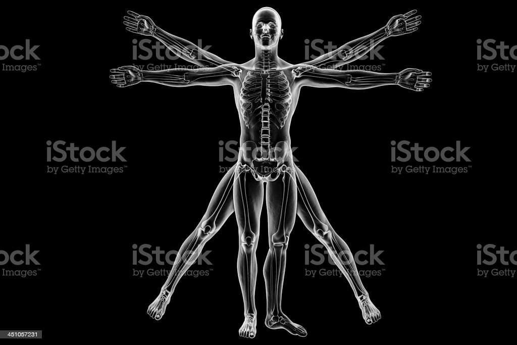 Vitruvian man with skeleton stock photo