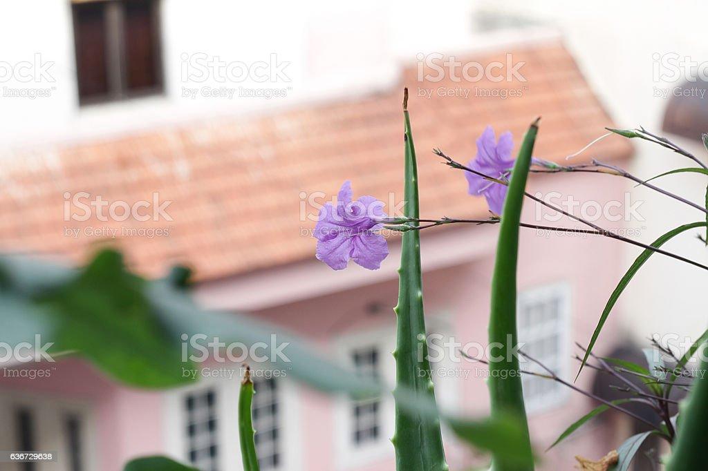 Vivid balloon flower stock photo