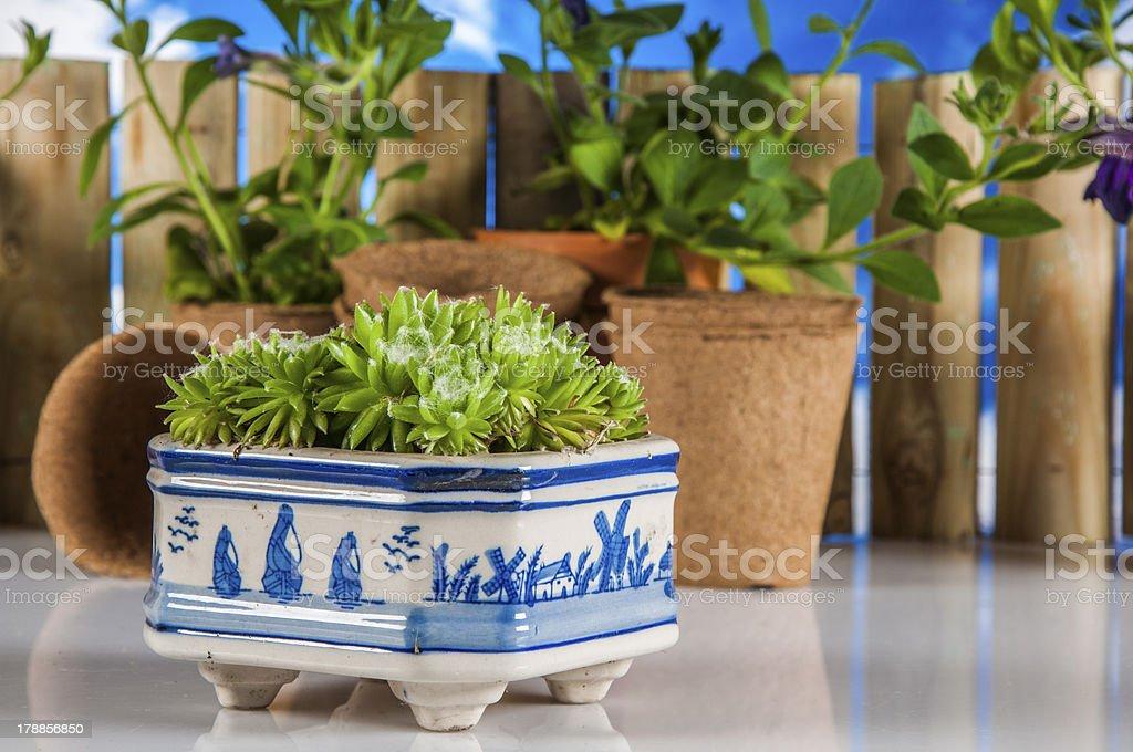 Vivid, bright gardening theme royalty-free stock photo