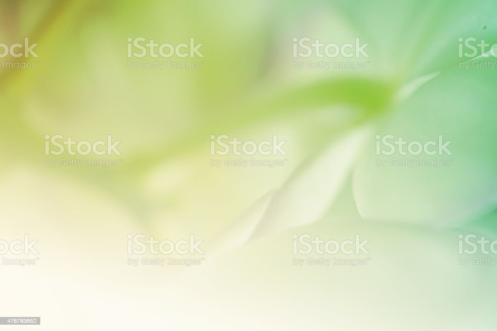 vivid color flower petals in soft style stock photo