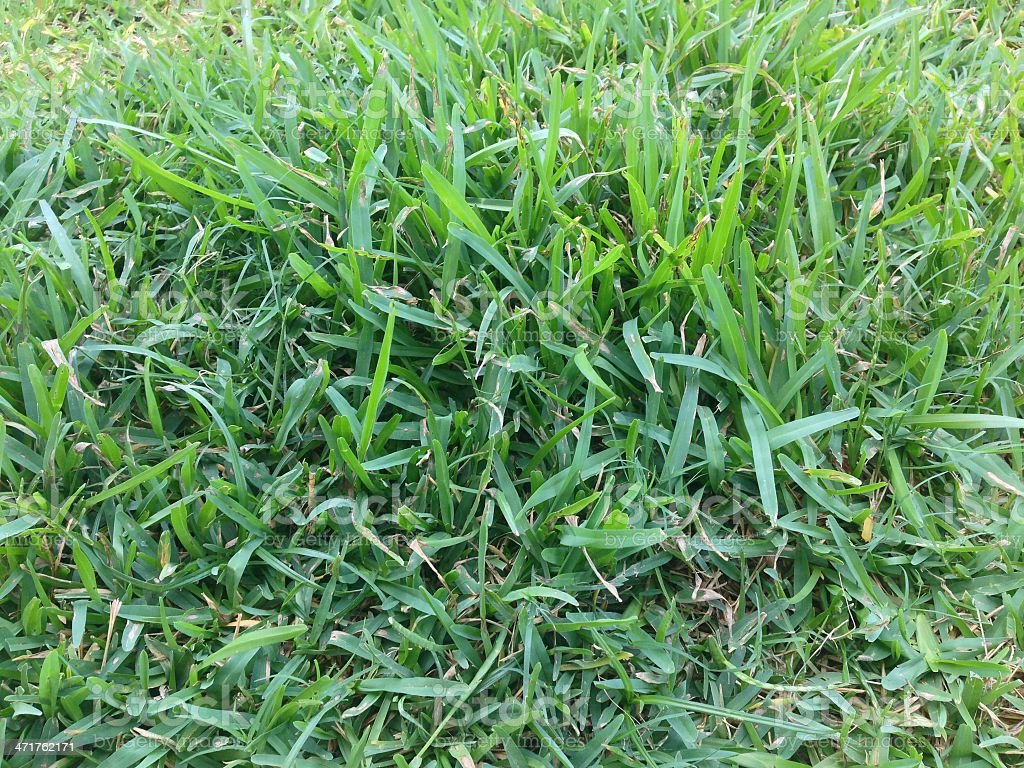 Vivid Green Grass stock photo