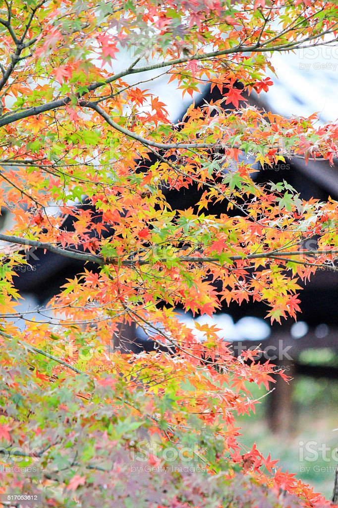 Vivid leafs with Japaneses style background stock photo