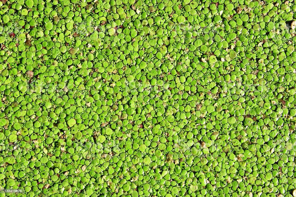 Vivid Nature royalty-free stock photo