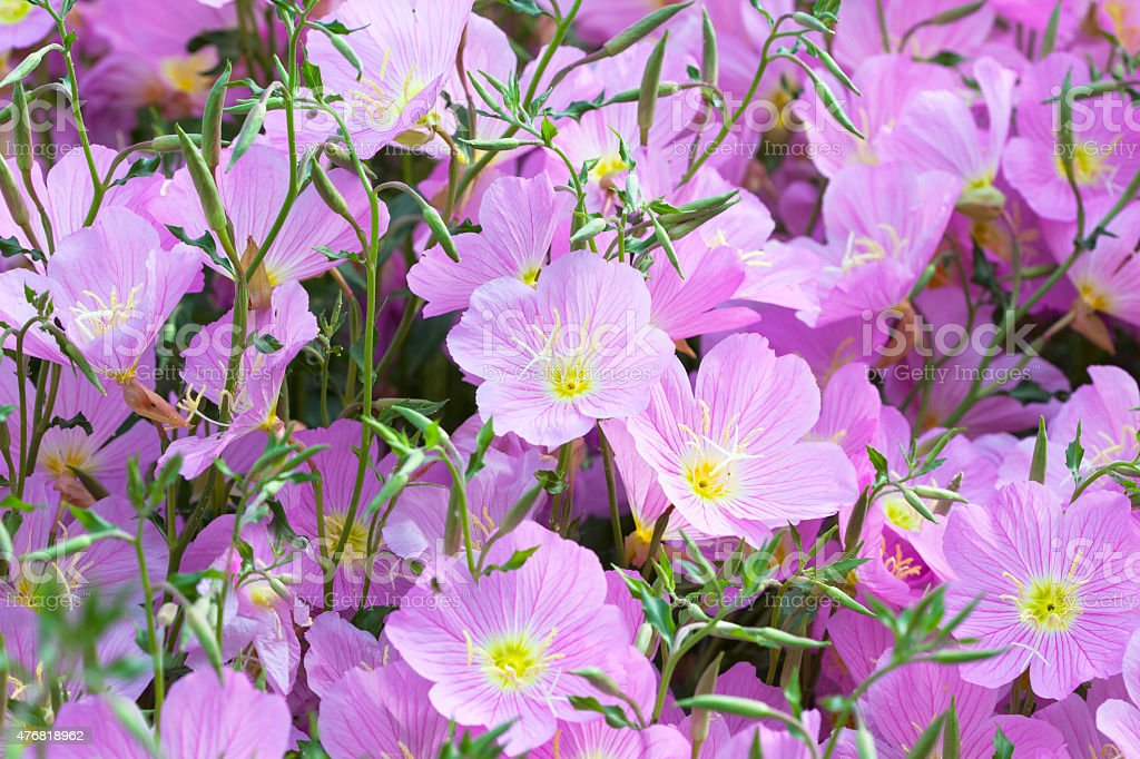 Vivid purple spring flowers stock photo