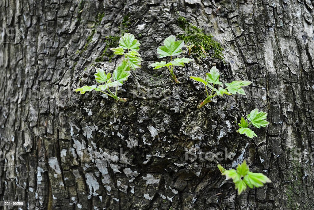 Vivification of tree stock photo