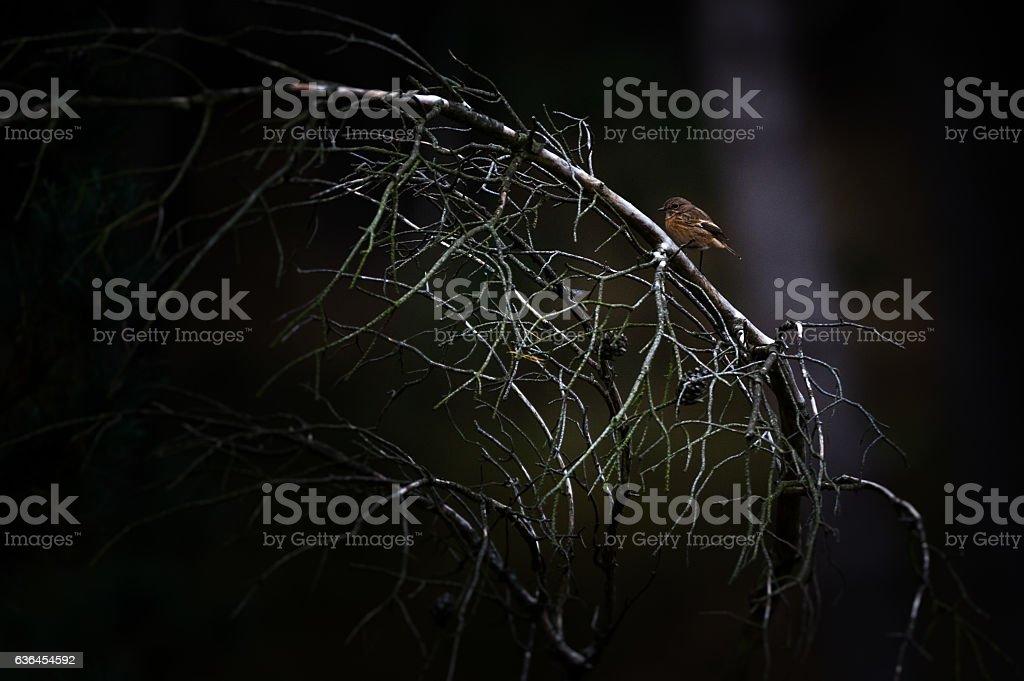 Vogel auf einem Ast stock photo