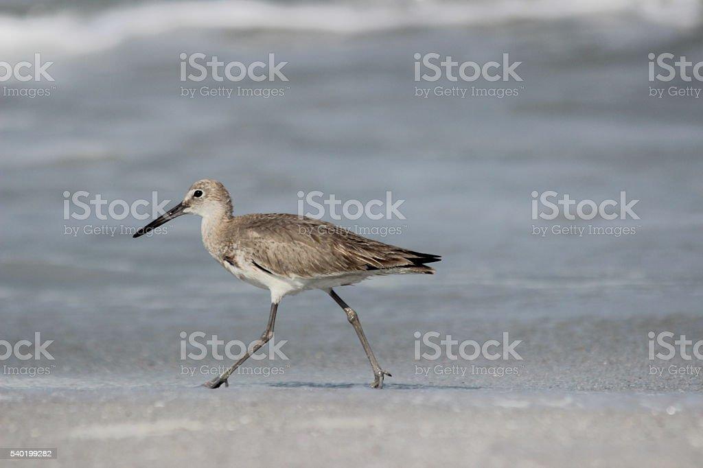 vogel stock photo