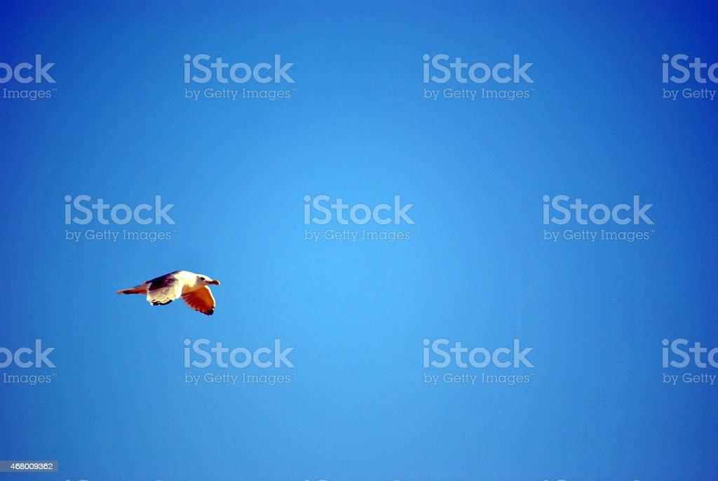volare stock photo