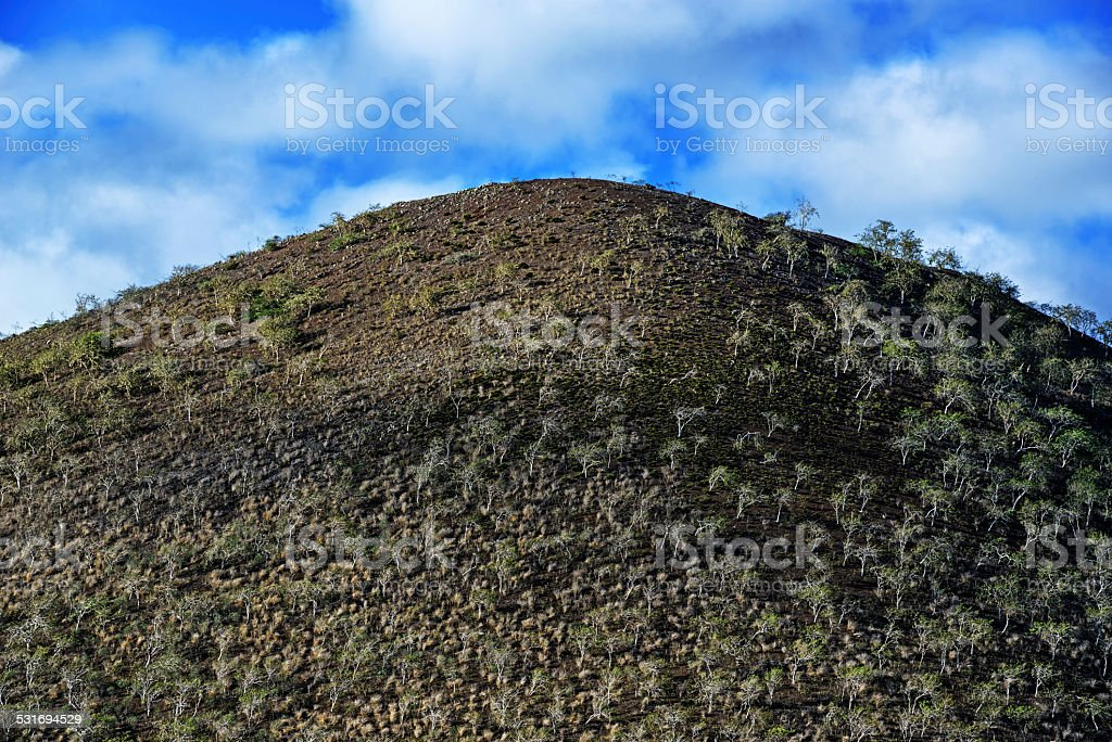 Volcanic hill with Scalesia Forest on Floreana Island stock photo