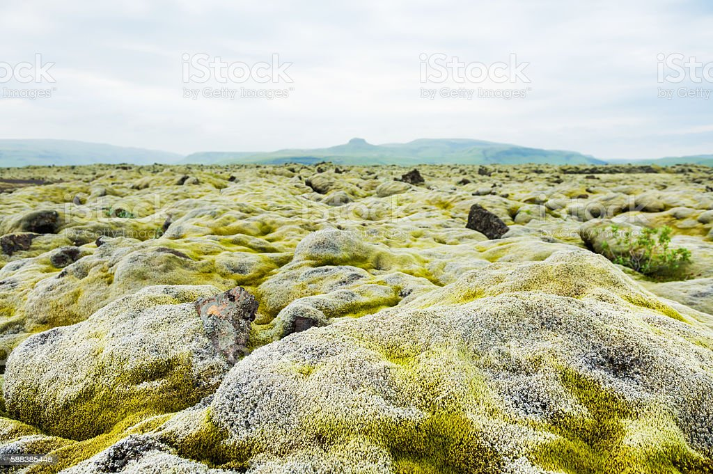 Volcanic lava fields with green moss in Iceland stock photo