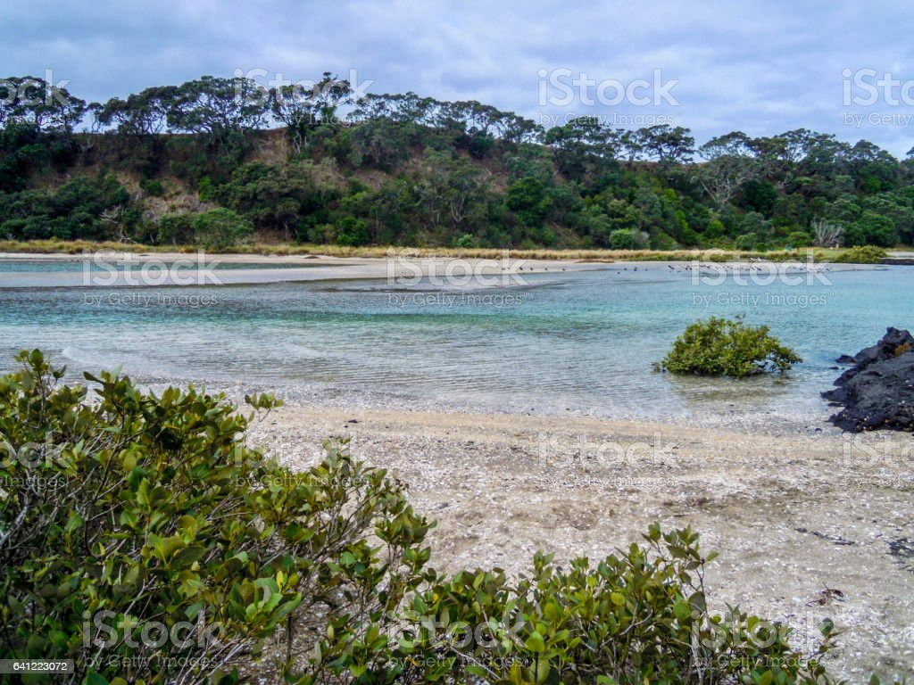 Volcanic nature in Rangitoto Island, New Zealand - Stock Image stock photo