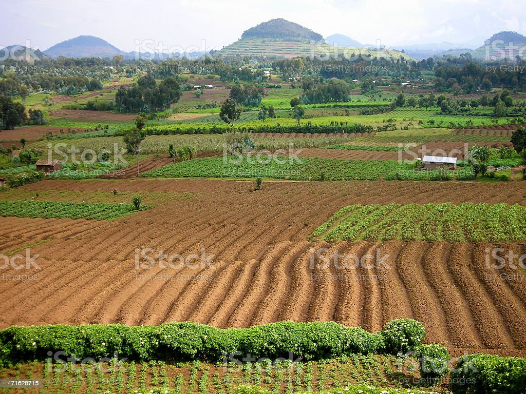 Volcanic Soils and Cinder Cones Virunga Mountains Rwanda Central Africa stock photo