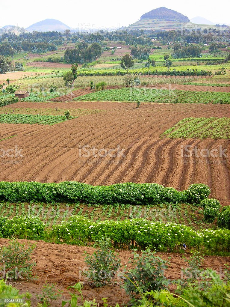 Volcanic Soils and Tropical Farming Mudende Rwanda stock photo