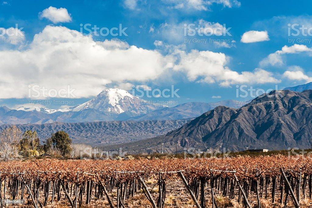 Volcano Aconcagua and Vineyard stock photo