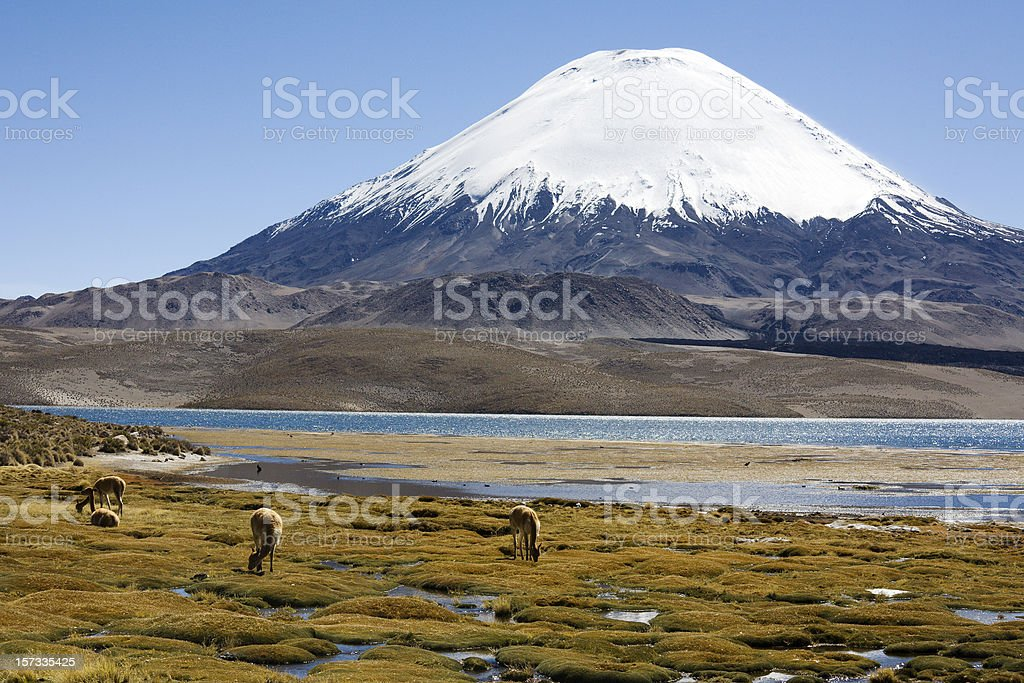 Volcano and Vicuna stock photo
