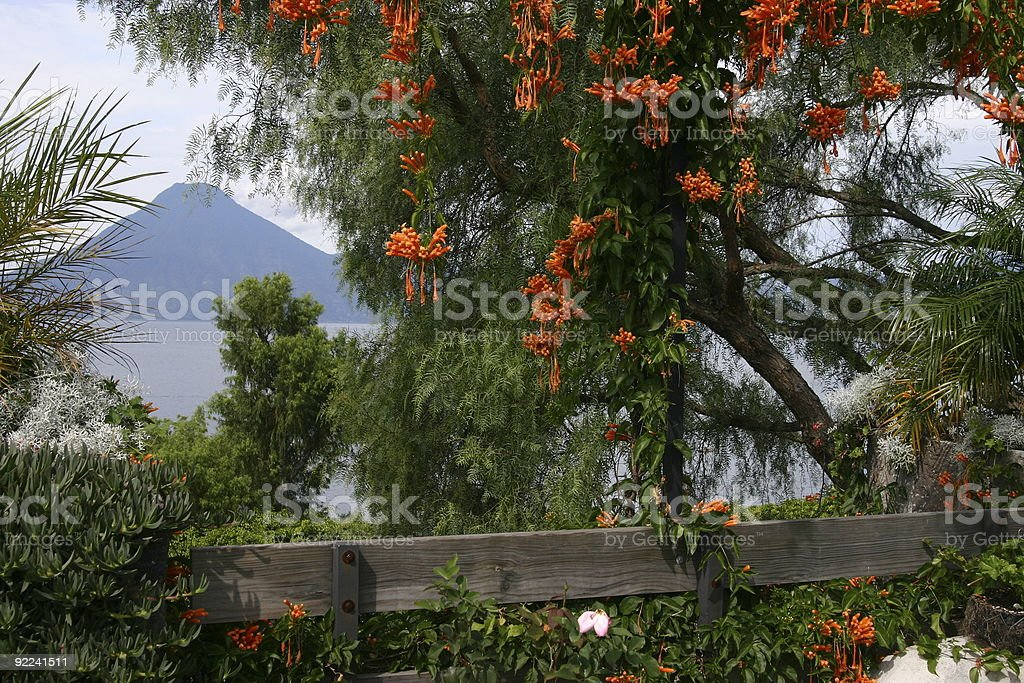 Volcano framed by flowers royalty-free stock photo