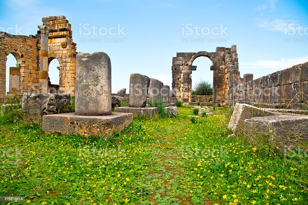 volubilis in morocco africa the yellow flower stock photo
