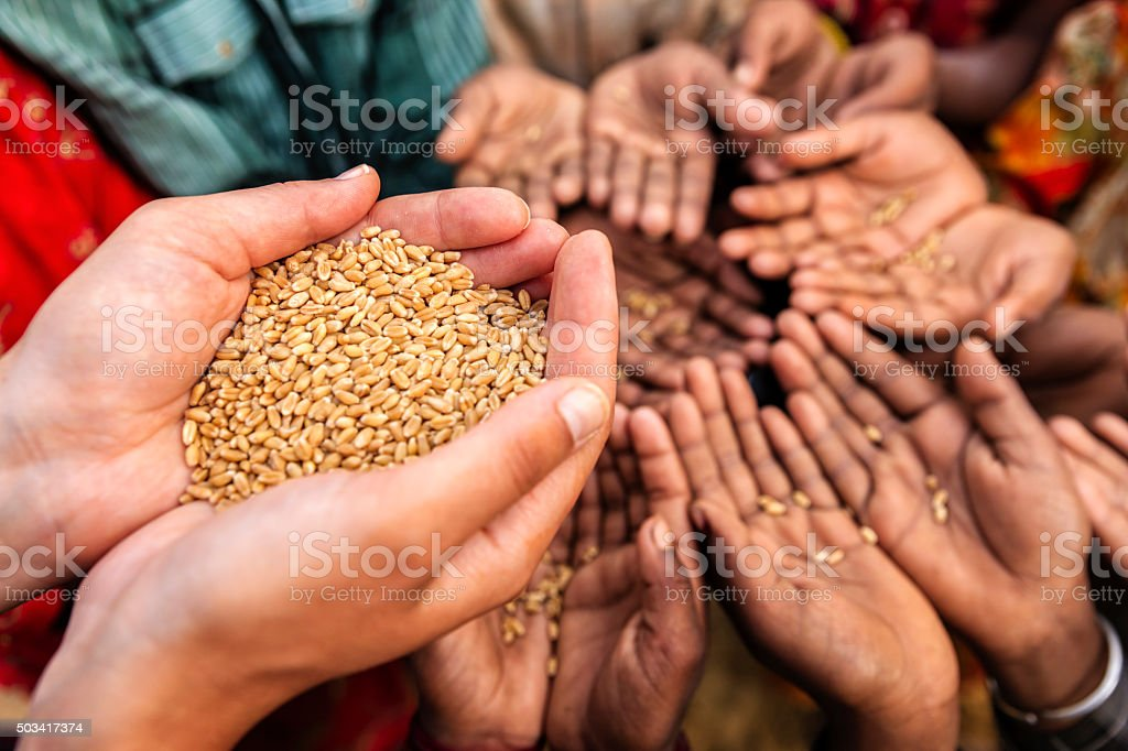 Volunteer caucasian woman giving grain to starving children stock photo