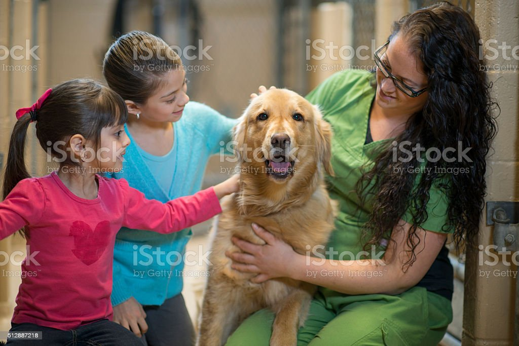 Volunteering at an Animal Shelter stock photo