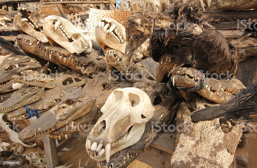 Voodoo Skulls at the Fetish Market in Lomé, Togo, Africa royalty-free stock photo