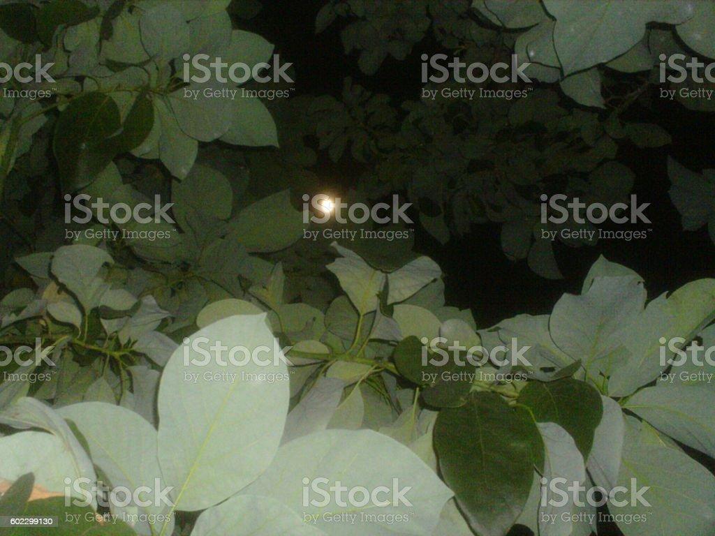 vortice de hojas hasta la luna stock photo