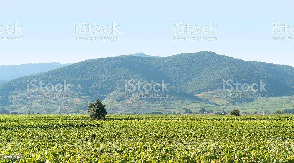 Vosges scenery stock photo