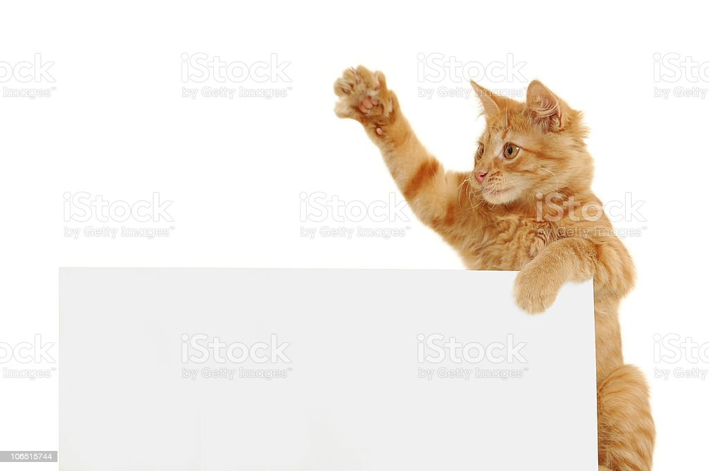 vote for cats stock photo