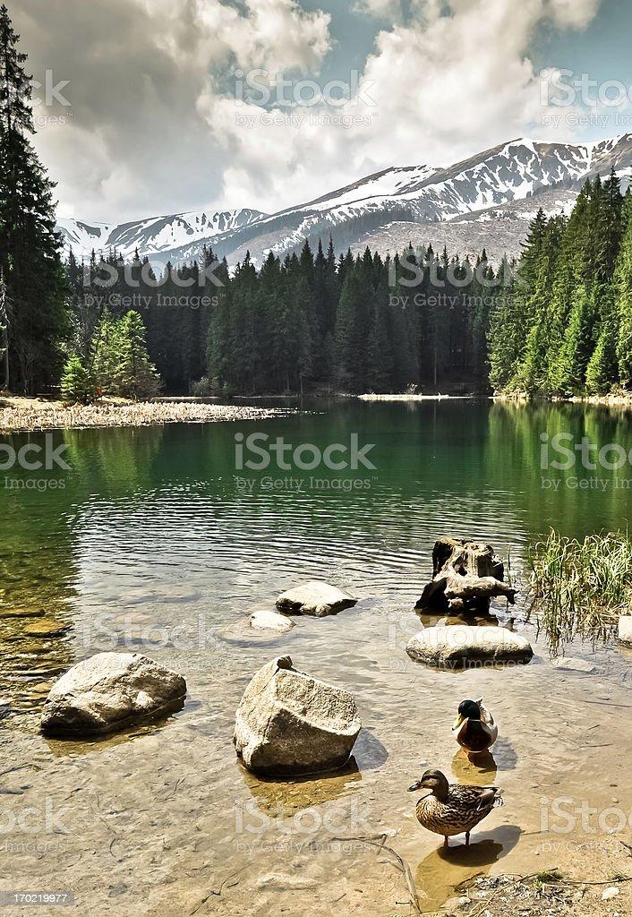 Vrbicke-See im Tatra-Gebirge. Die Slowakei Lizenzfreies stock-foto