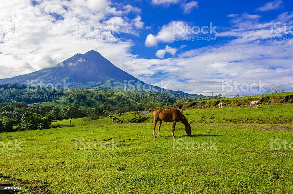 Vulcano Arenal - Horses on pasture stock photo