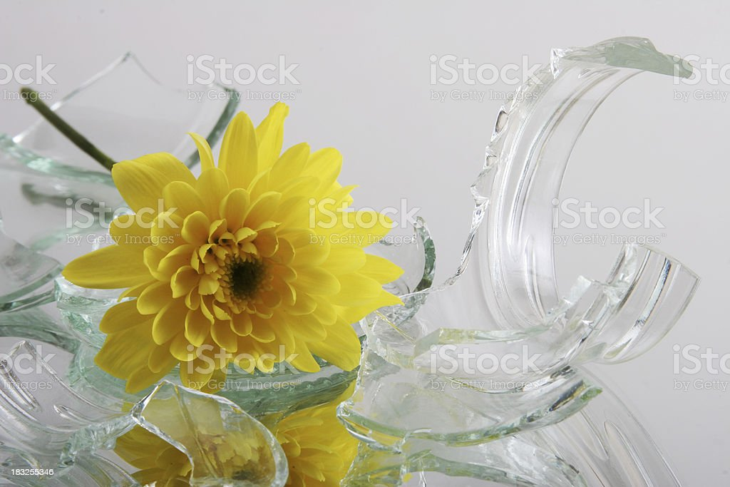vulnerable,  glass with flower royalty-free stock photo