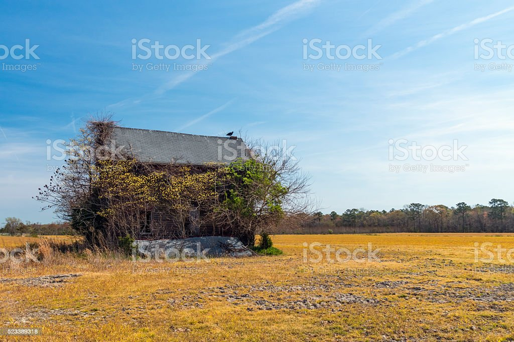 Vulture Atop Abandoned House royalty-free stock photo