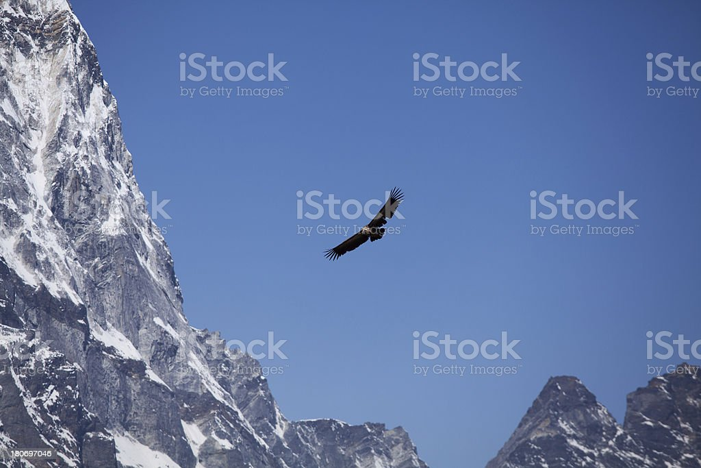 Vulture bird flying between Himalayas mountains royalty-free stock photo