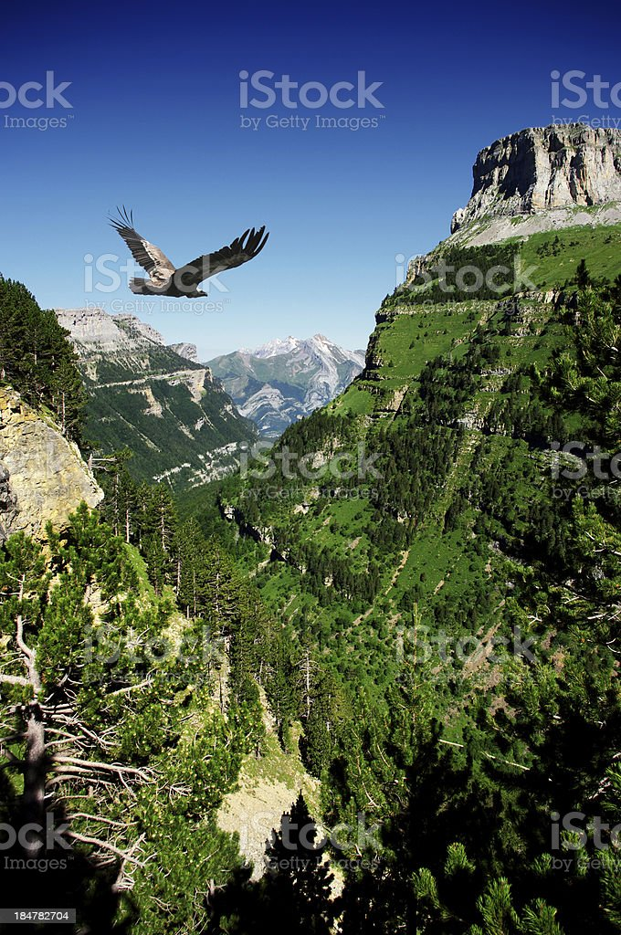 vulture flying in Ordessa valley stock photo