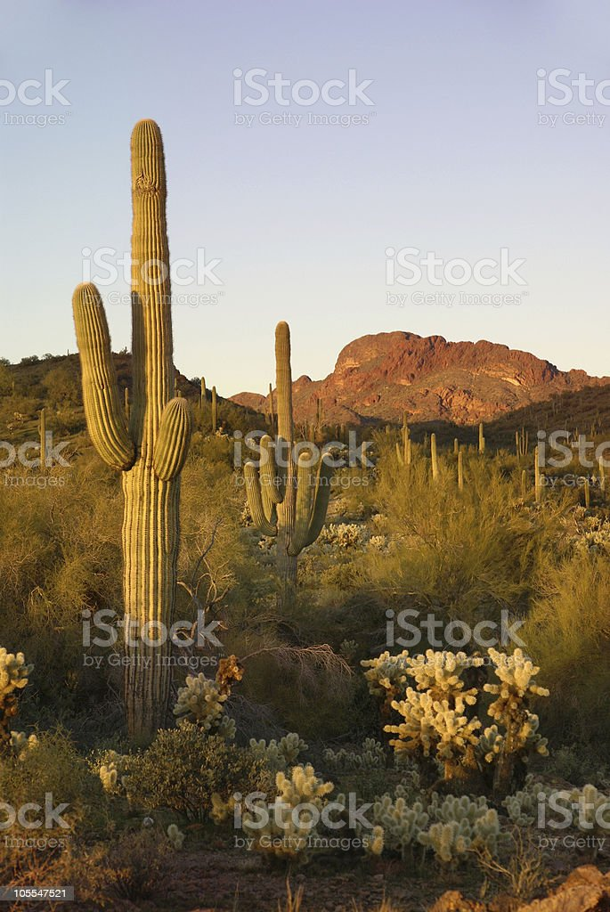 Vulture Mountains royalty-free stock photo