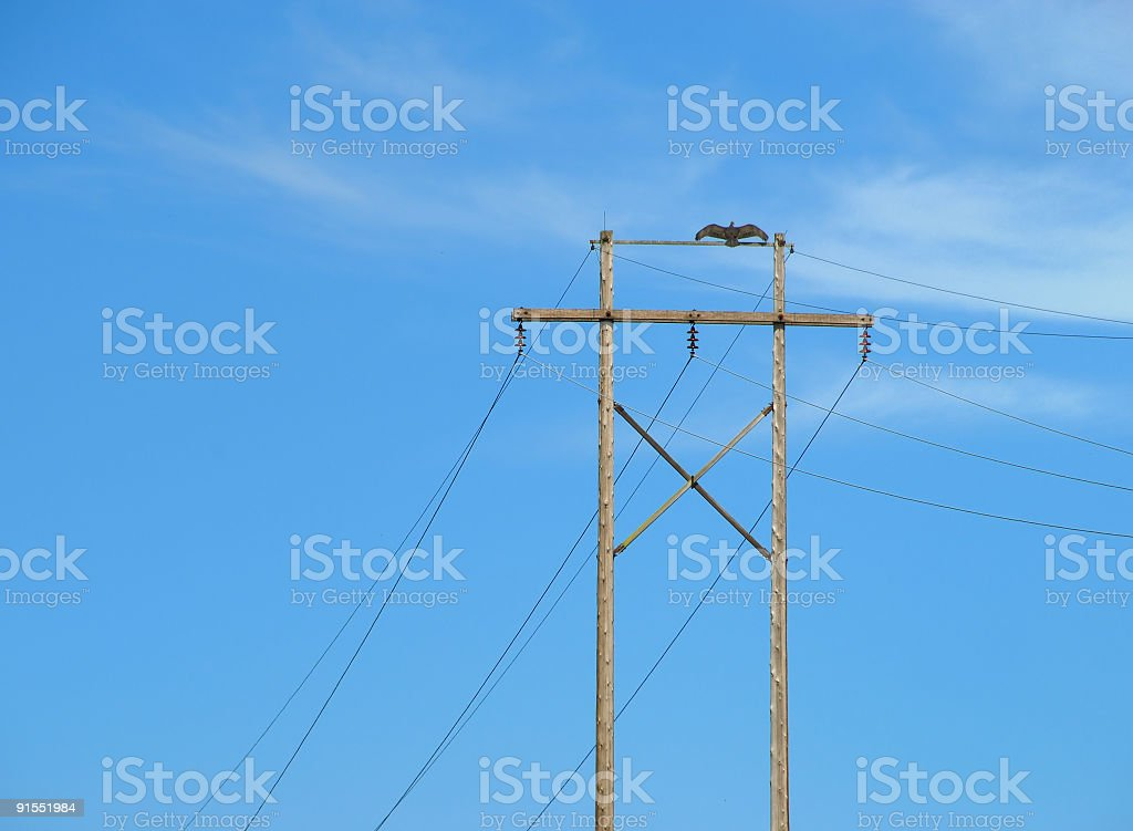 Vulture on Pole royalty-free stock photo