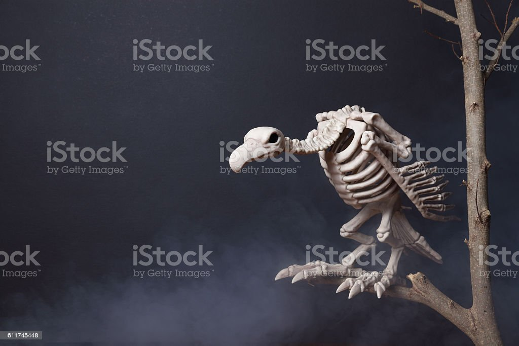 Vulture Skeleton on a deciduous tree stock photo