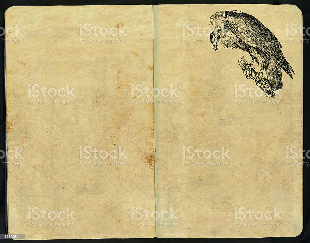 Vulture Sketch Pad royalty-free stock photo
