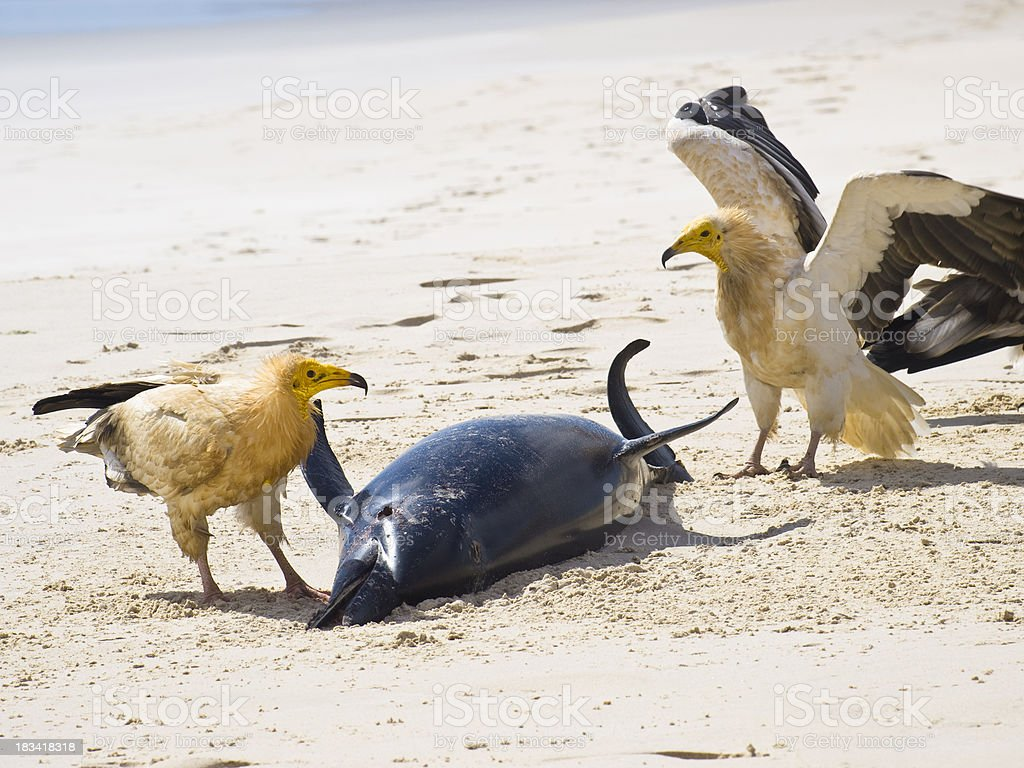 Vultures and dolphin stock photo